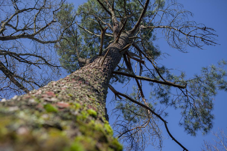 Arbre - forêt de Sologne