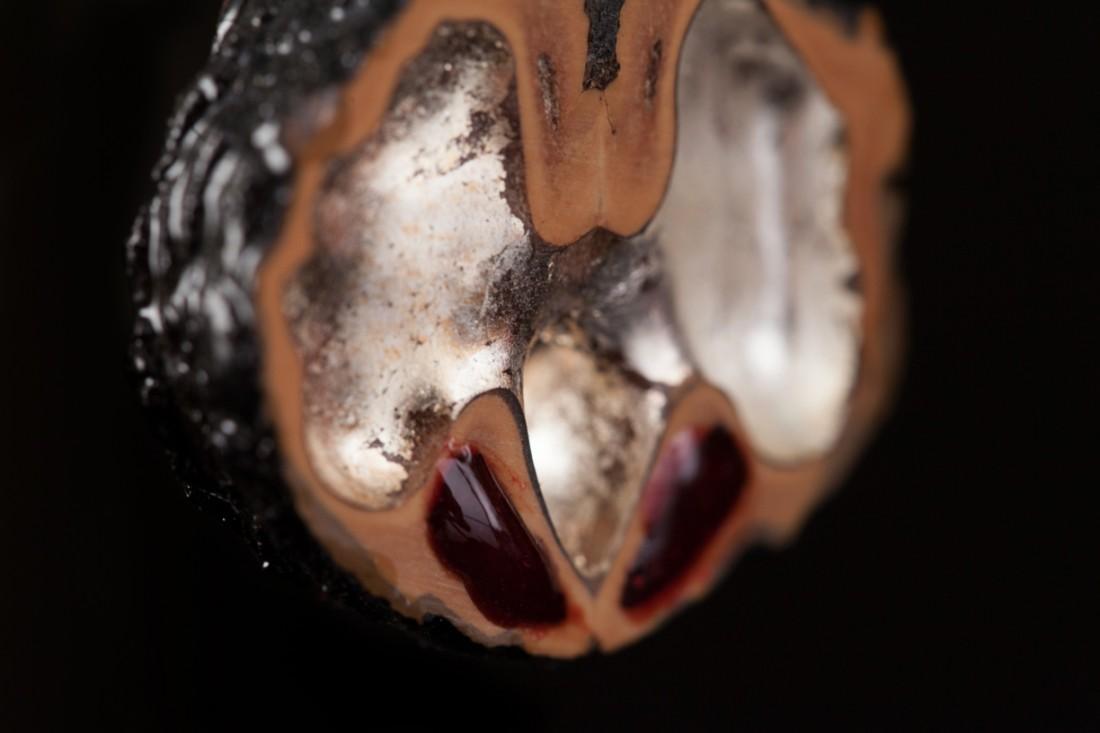 Détail boucle d'oreille noire noix et resine